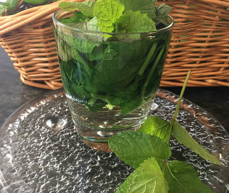 How to Make Fresh Mint Tea and 100% Profit