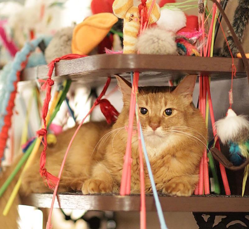 Cat Cafe Akihabara