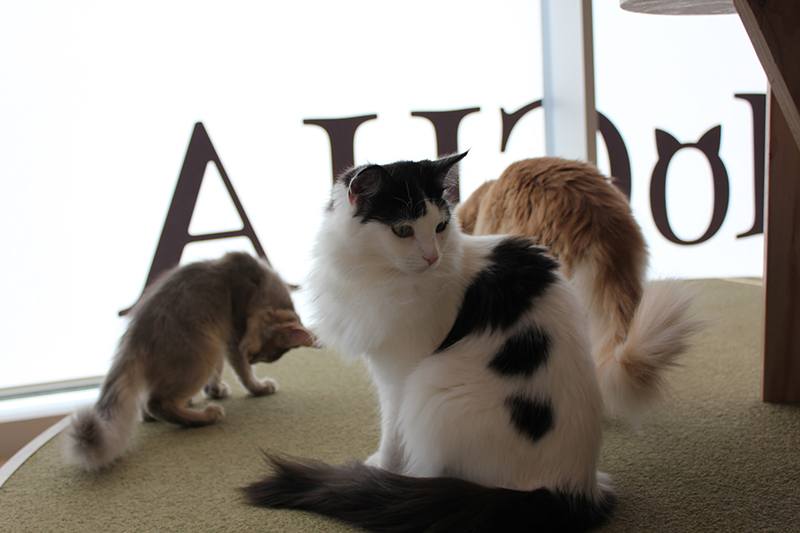 7 Best Cat Cafes in Tokyo